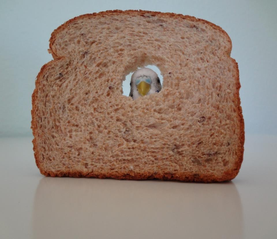 Смешной хлеб картинки